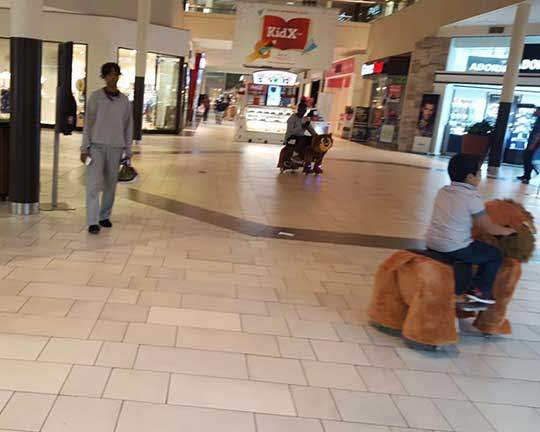 USA-customers-feedback-of-motorized-plush-riding-animals-in-malls